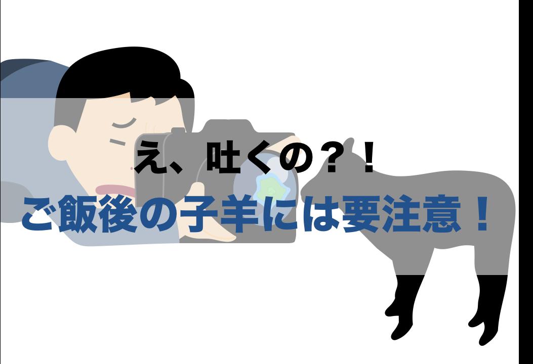 ご飯後の羊には要注意(Top)